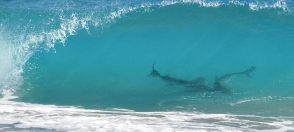 Image: Thousands of Sharks Shut Down Florida Beaches