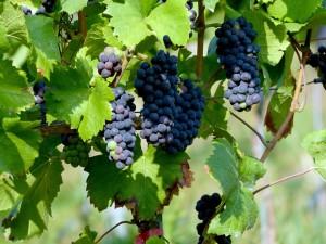 route-vins-vignobles-san-diego-californie-g-2687