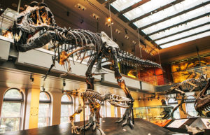 4-natural-history-museum-los-angeles-free-things-to-do-in-los-angeles_dinossaur