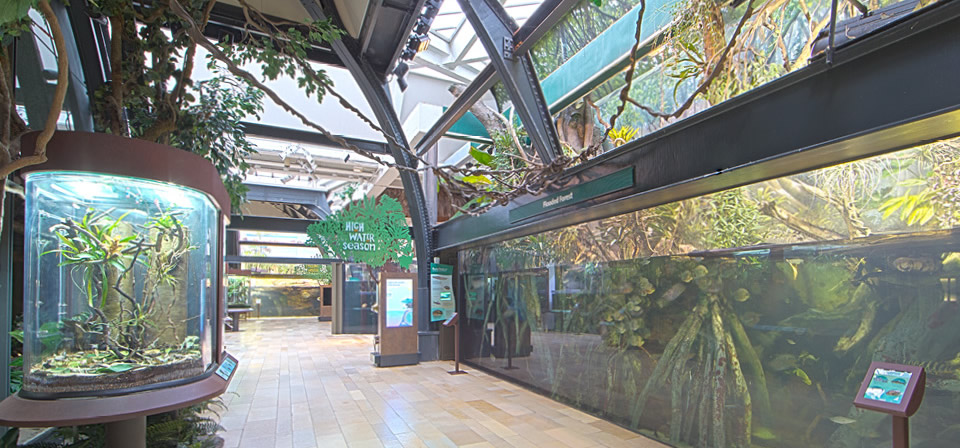 john-shedd-aquarium-chicago-amazon-rising