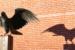 sophie-raven-avocate-immigration-visas-carte-verte-new-york-s03