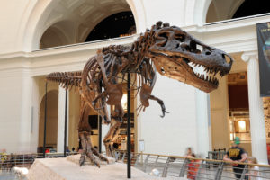 CHICAGO, IL – MARCH 23: T. Rex called Sue at the Field Museum of Natural History on March 23, 2012 in Chicago, Illinois