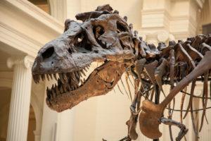 Squelette de dinosaure au Chicago Field Museum — Photo par fotofoster1