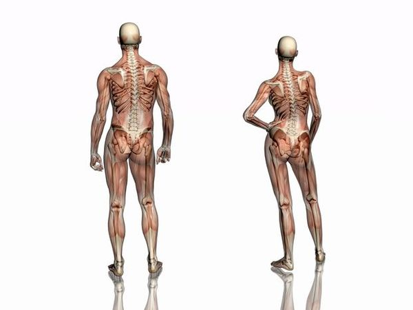 Free Anatomy & Physiology course | Aletrnative Medicine College Canada
