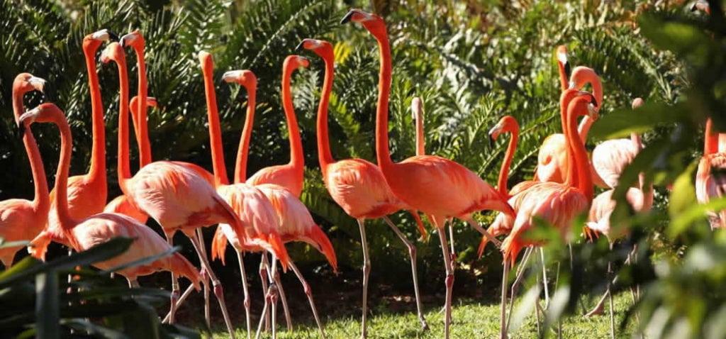 Les incontournables de Miami, visiter Jungle Island