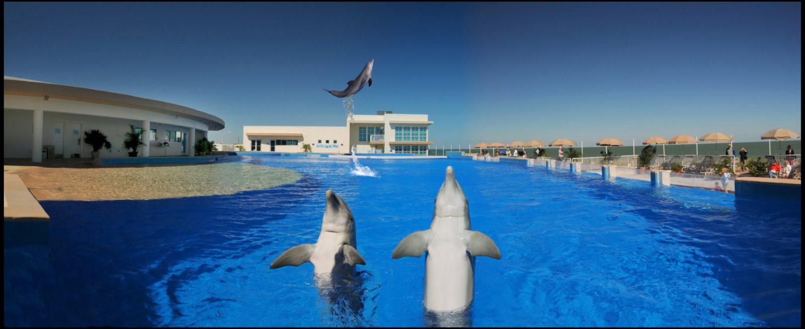 Texas Auto Pros >> Nager avec les dauphins en Floride à St Augustine - Marineland