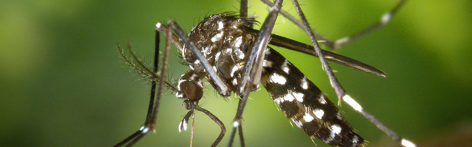 moustiques-ete-floride-everglades-miami-une