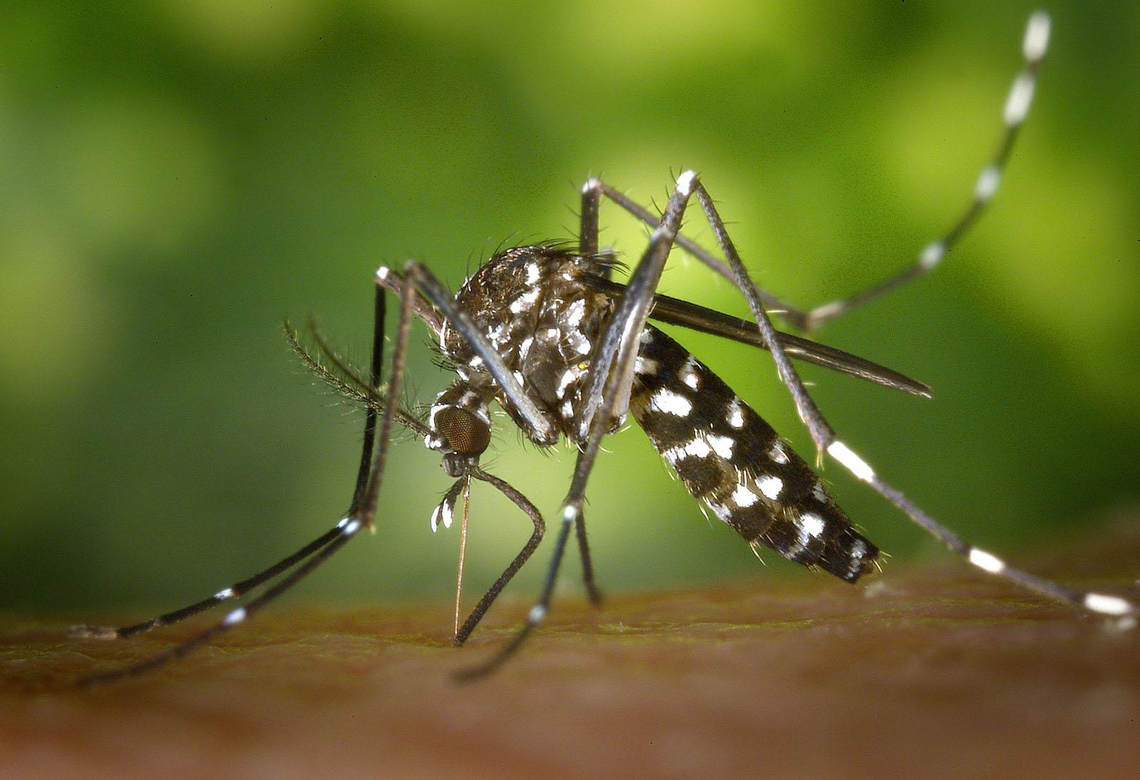 Remede De Grand Mere Contre Les Moucherons Dans La Maison un été sans moustique en floride - remèdes et conseils anti
