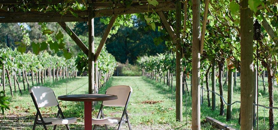 route-vins-vignobles-floride-fiorelli-winery