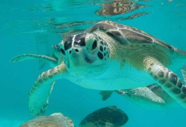 turtle-hospital-hopital-tortues-marathon-keys-une