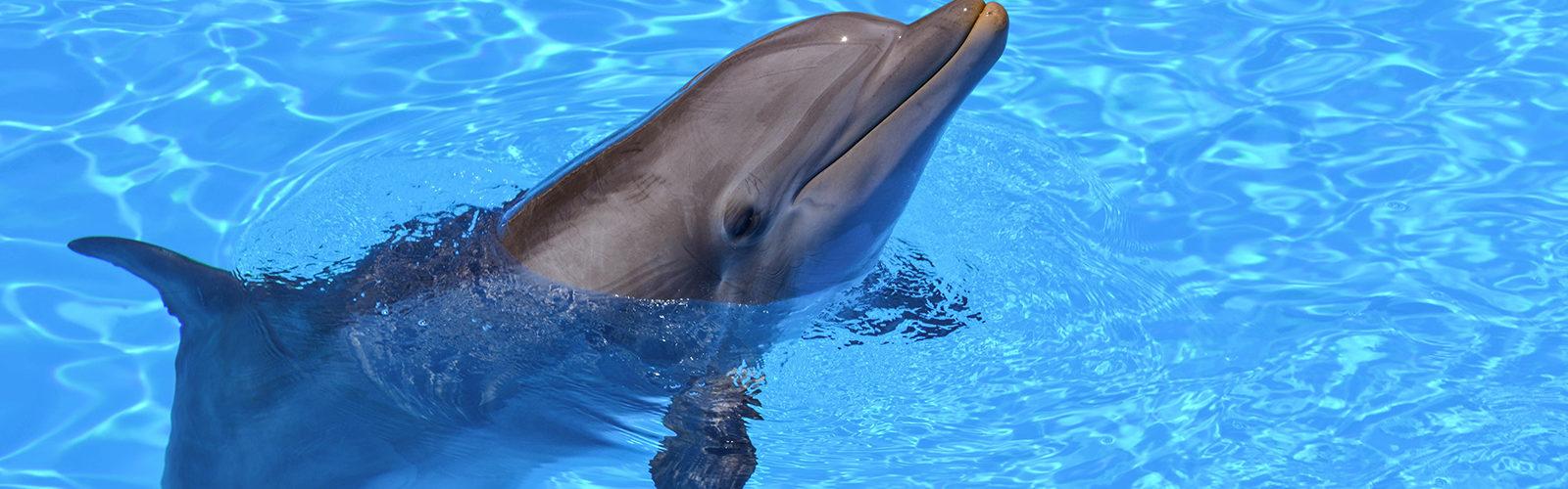 dauphin-aquarium-miami
