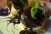 sugar-reef-restaurant-exotique-bio-bord-mer-hollywood-s2-02