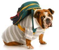 Les Dog sitters, des nounous pour vos toutous