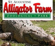 The Alligator Farm, le Royaume des crocos du monde entier à Saint Augustine