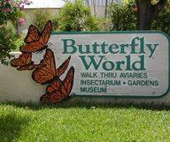 Le parc à papillons Butterfly World tout près de Miami