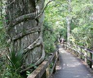 En Avant, Marche ! Quelques idées de randonnées dans les Everglades