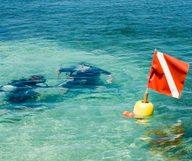 Les meilleurs spots de plangée à Key West