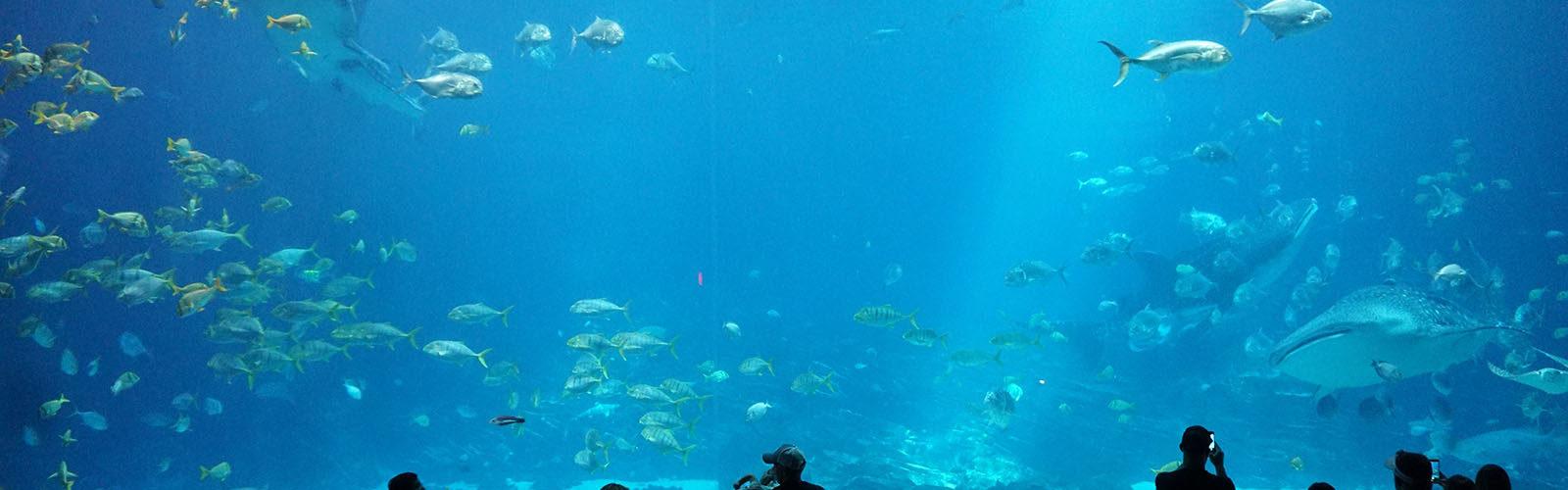 aquarium-floride