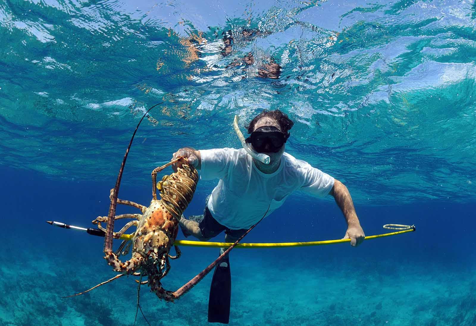 Pêcher la langouste à Key Biscayne