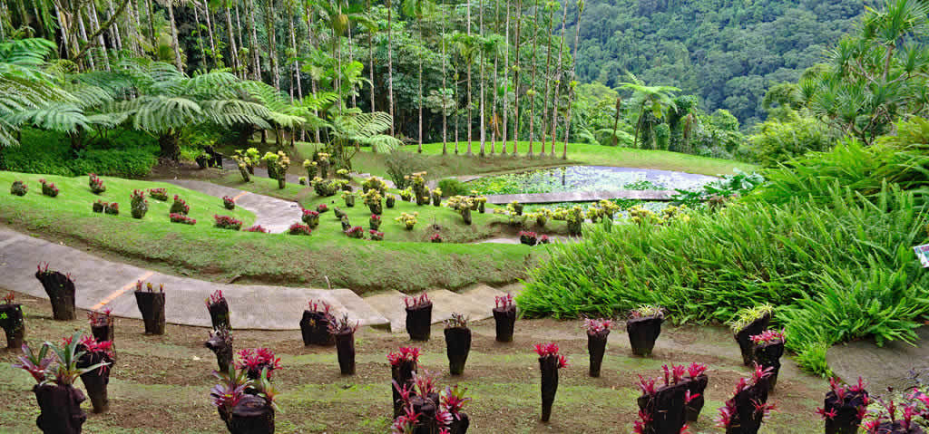 visiter-martinique-caraibes-ile-faire-voir-jardin-balata