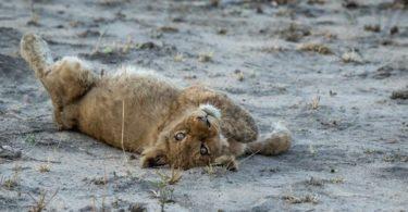 Visiter la Zoological Wildlife Foundation- Animaux sauvages à Miami