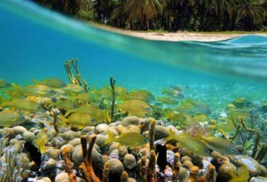 Les Bahamas au départ de Miami, ça vous dit ?