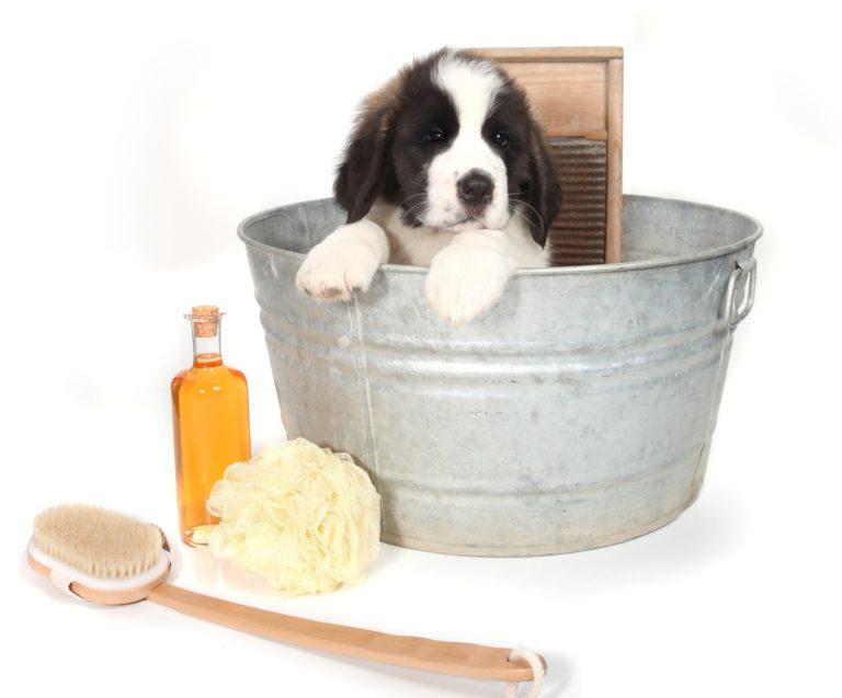A vendre salon de toilettage canin miami floride - Salon toilettage a vendre ...
