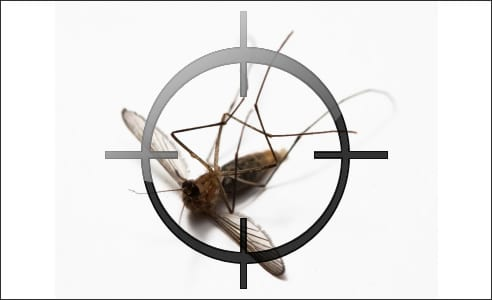 Un été sans moustiques en Floride