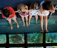 Visite des dessous de la Floride avec le Glass Bottom boat
