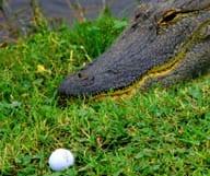 Visiter la Floride en golfant - Seconde partie