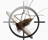 Un été sans moustique en Floride