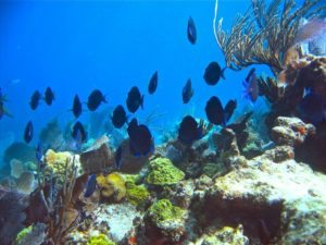 John-Pennekamp-Coral-Reef-State-Park-800x600