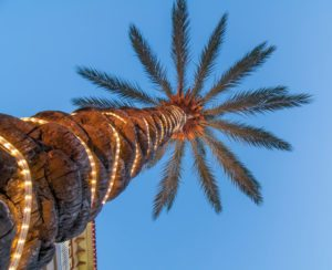 palm tree scenics at a luxury boarwalk and resort in florida