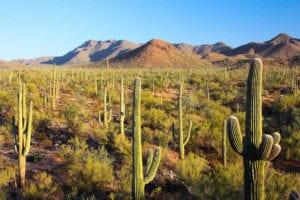 voyage-arizona-grand-canyon-parcs-nationaux-barrage-hoover-sagaro-national-park