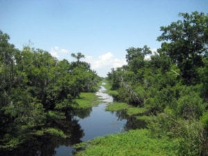 bayou-louisianne-mississippi-marecages-alligators-plantations-barataria-preserve