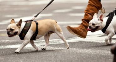 avoir-chien-droits-regles-devoirs-manhattan-nyc-article-2