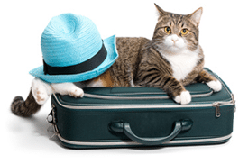 usa-transports-mari-demenagement-international-france-usa-animaux-domestiques
