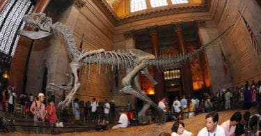 musee-histoires-naturelles-americain-nyc-une