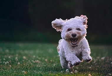 dog-walking-article