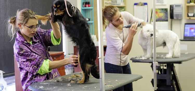 grooming_pet_dog_pet_grooming_animal_cute_dog_grooming_canine-1294909 (1)