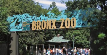 bronx-ny-zoo-article