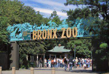 bronx-ny-zoo-article