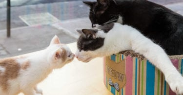meow-parlour-cafe-a-chats-cat-bar-manhattan-une