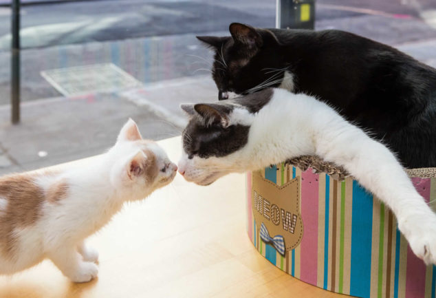 Meow Parlour, le café à chats à Manhattan