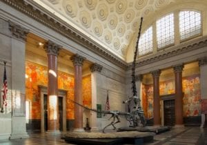 visiter-new-york-musee-soiree-croisiere-helicoptere-natural-history-museum