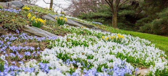 Les plus beaux parcs botaniques de New York