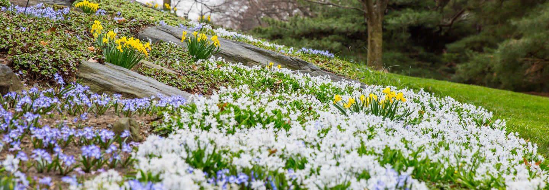 visiter-decouvrir-parcs-botaniques-fleurs-nature-une