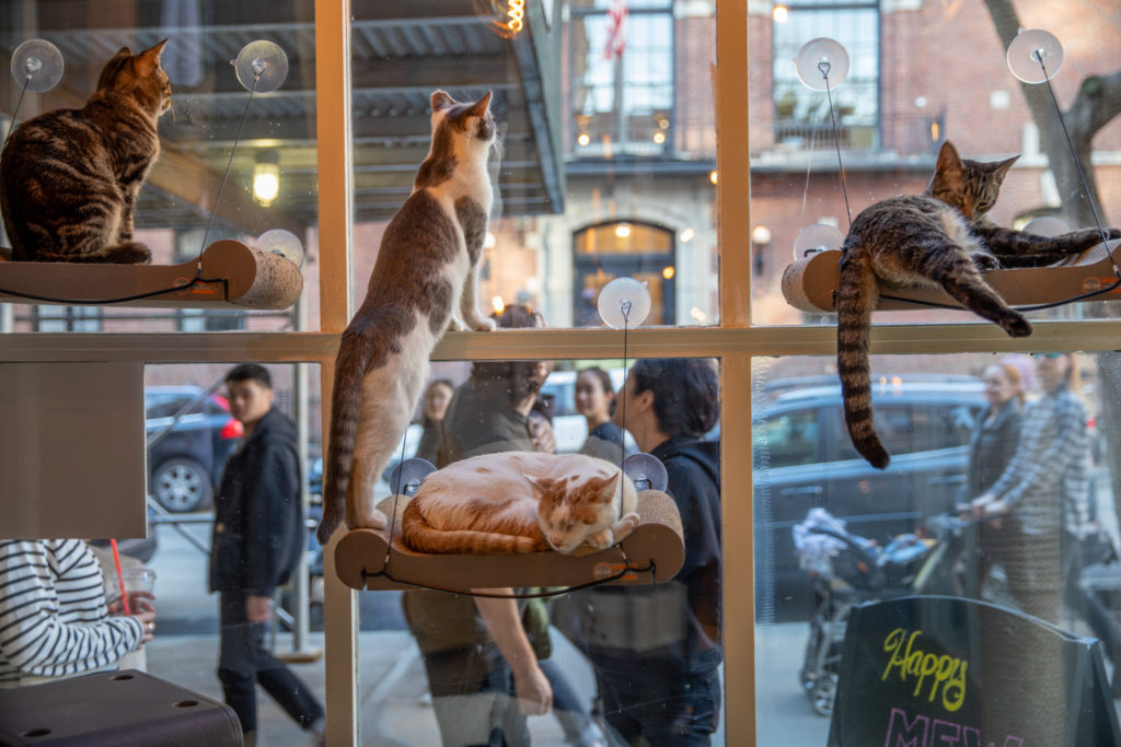 cafe-cats-looking-out-window-at-crowd_alexandra-steedman-1024x683