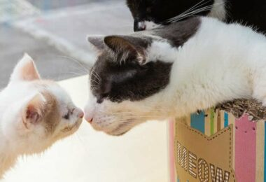 meow-parlour-cafe-a-chats-cat-bar-manhattan-une-1500x500