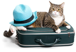 usa-transports-mari-demenagement-international-france-usa-animaux-domestiques
